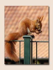 Mein Freund - das Hörnchen