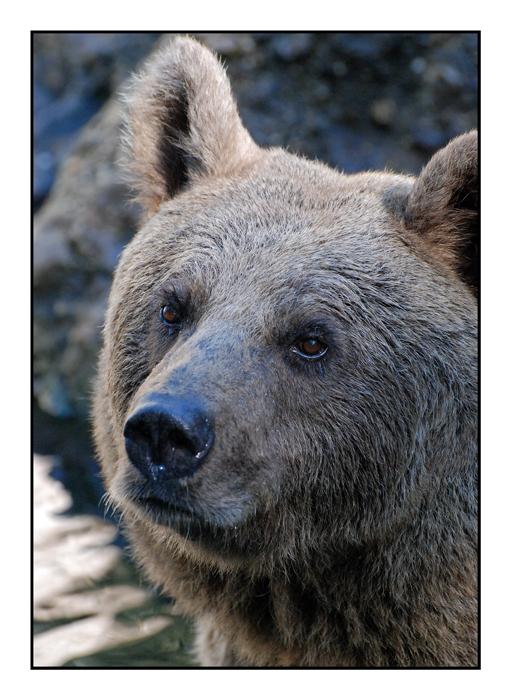 Mein Freund, der Bär