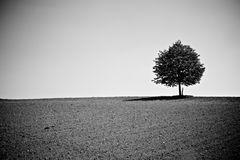 ...mein Freund der Baum!