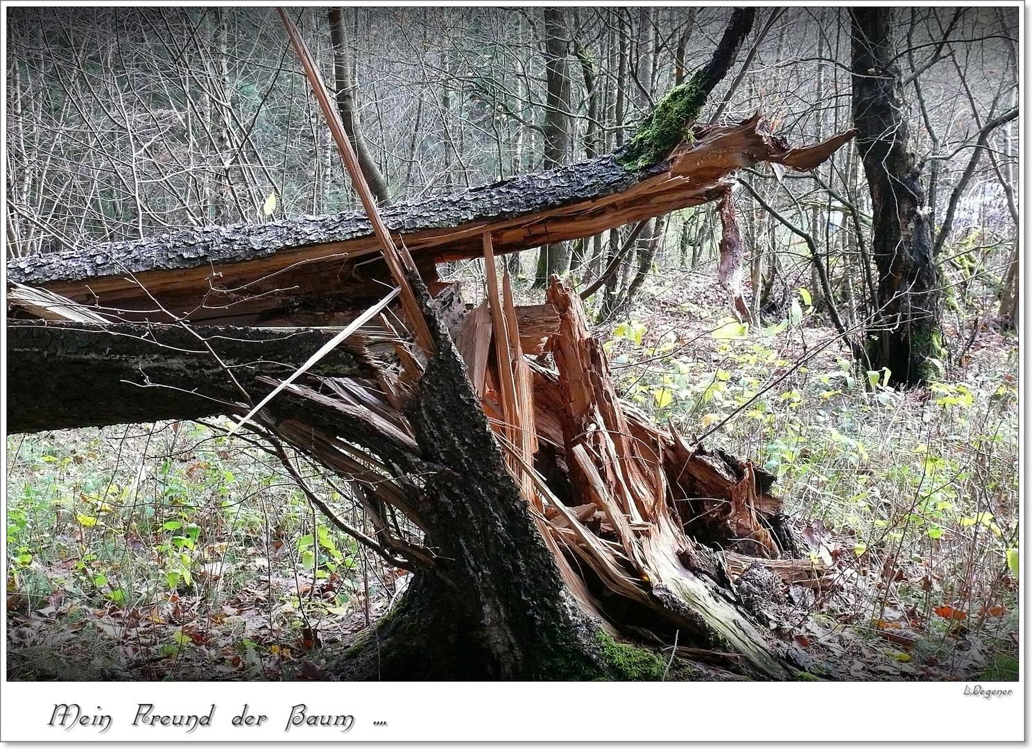 Mein Freund der Baum .....