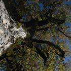 Mein Freund der Baum 3
