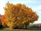 Mein Freund - Der Baum ...