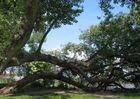 Mein Freund der Baum
