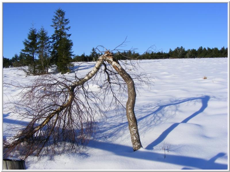 Mein Freund der Baum....