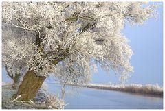Mein Freund der Baum.................