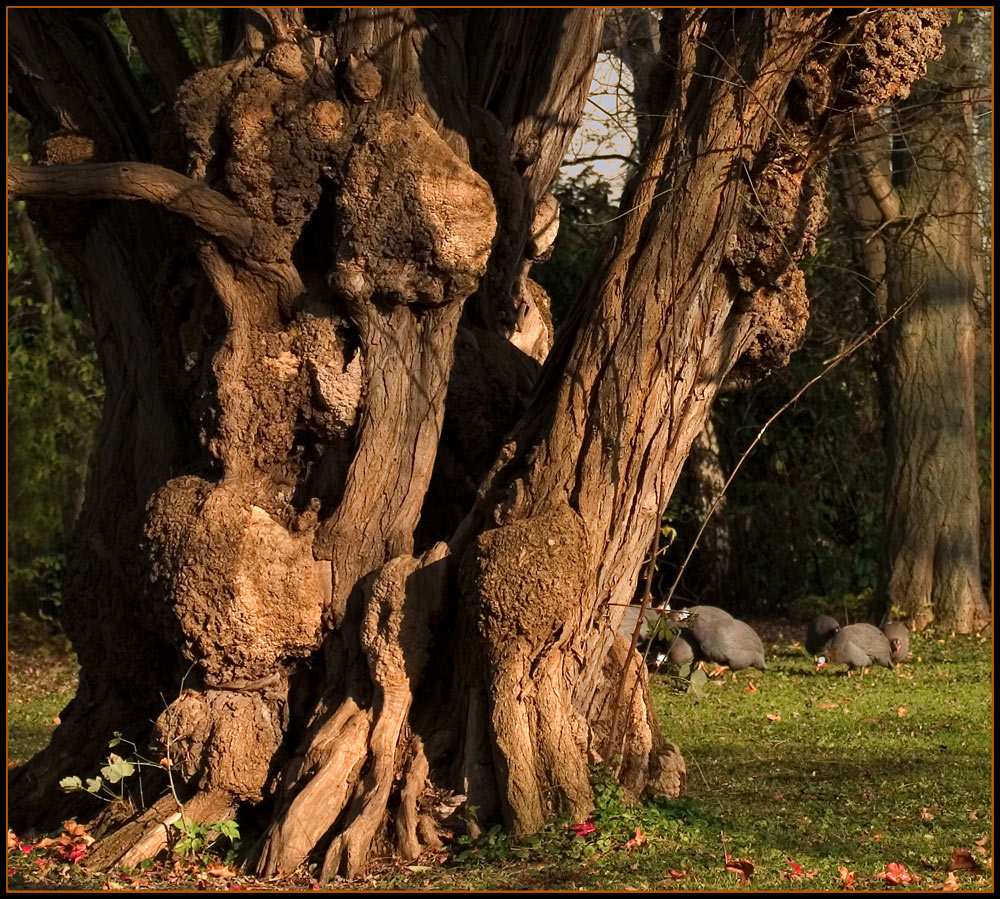 Mein Freund, der Baum....