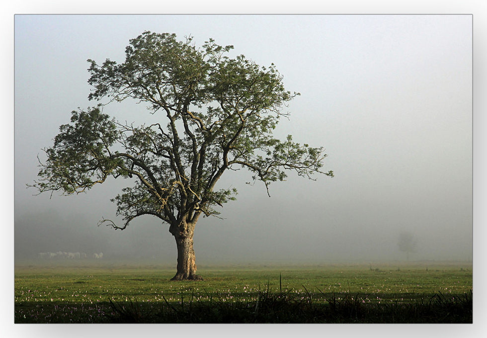 """""""Mein Freund der Baum"""" an der Saone"""