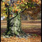 Mein Freund, der Baum ...