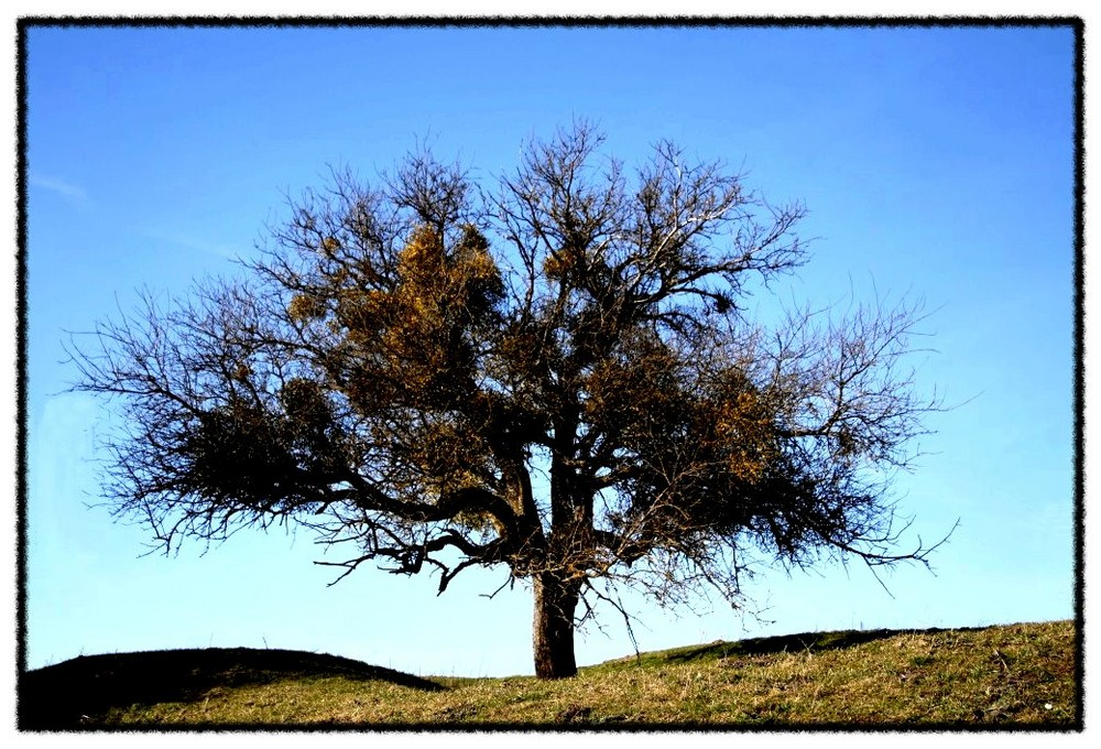 Mein Freund, der Baum .....