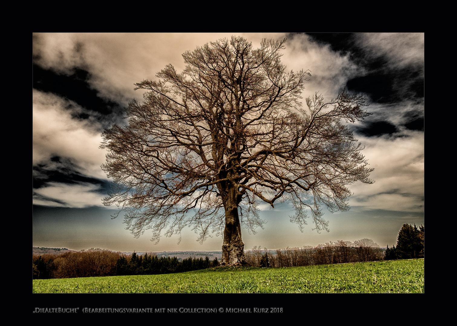 """""""Mein Freund der Baum"""""""