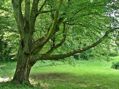 """Mein Freund der """"Baum"""""""