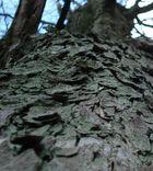 ~ mein Freund der Baum ~