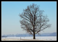 Mein Freund, der Baum - lebt !