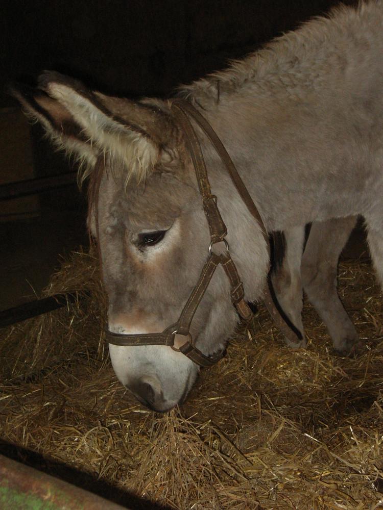 Mein freund der Esel