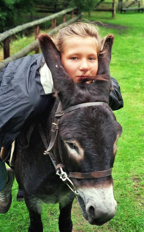 Mein Freund, der Esel