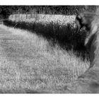 mein Freund der Fuchs
