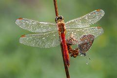 mein Freund, der Schmetterling - reload