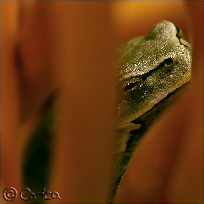 mein frosch