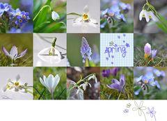 Mein Frühling