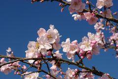 Mein Frühlingsanfang