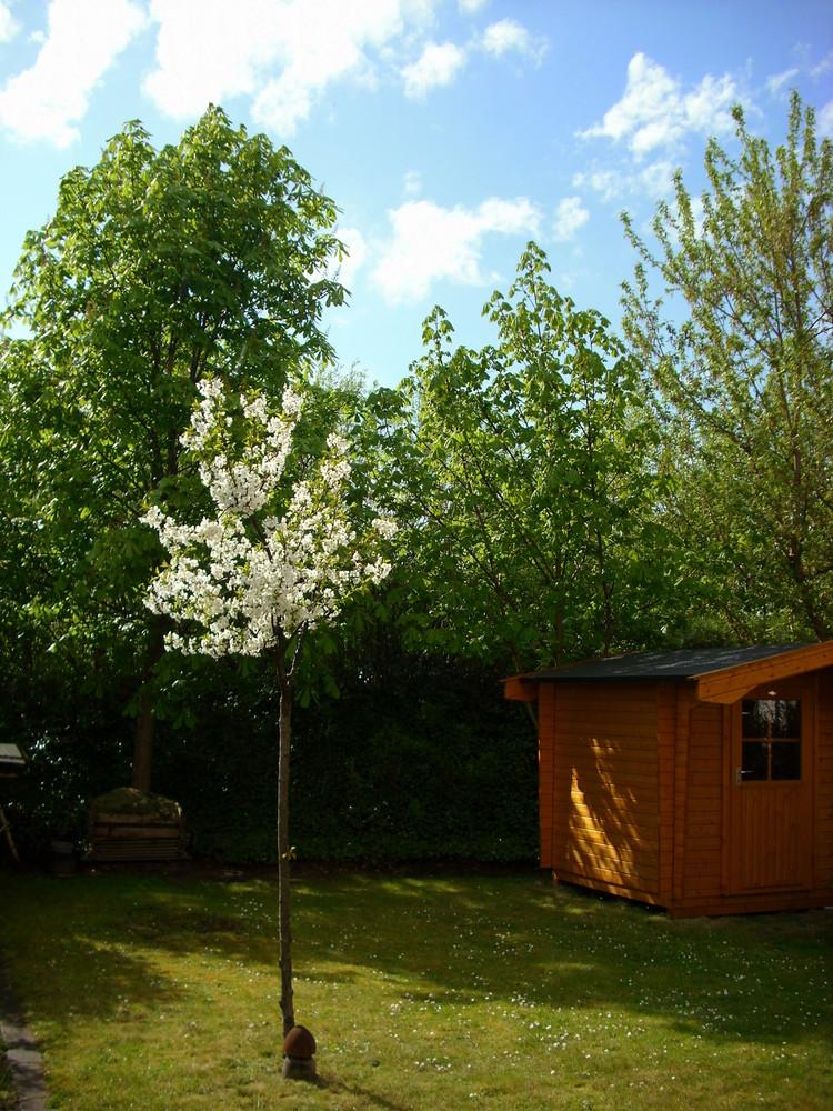 Mein Garten am 1. Mai 2008