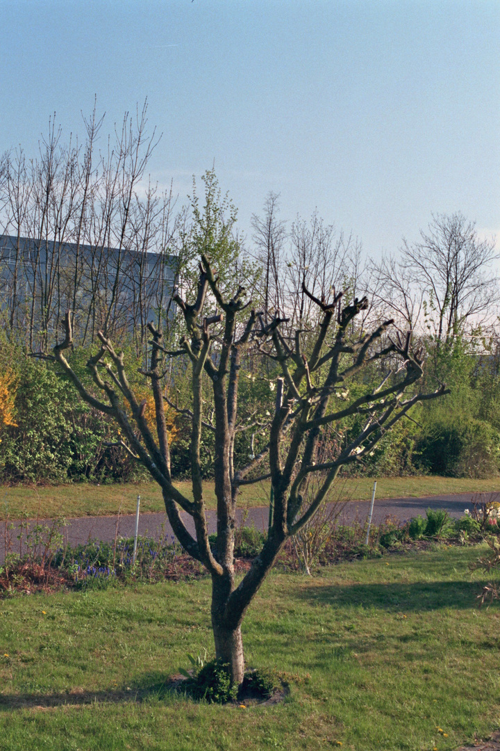 Mein Garten Baum
