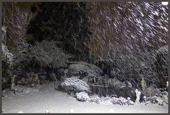Mein Garten   es schneit