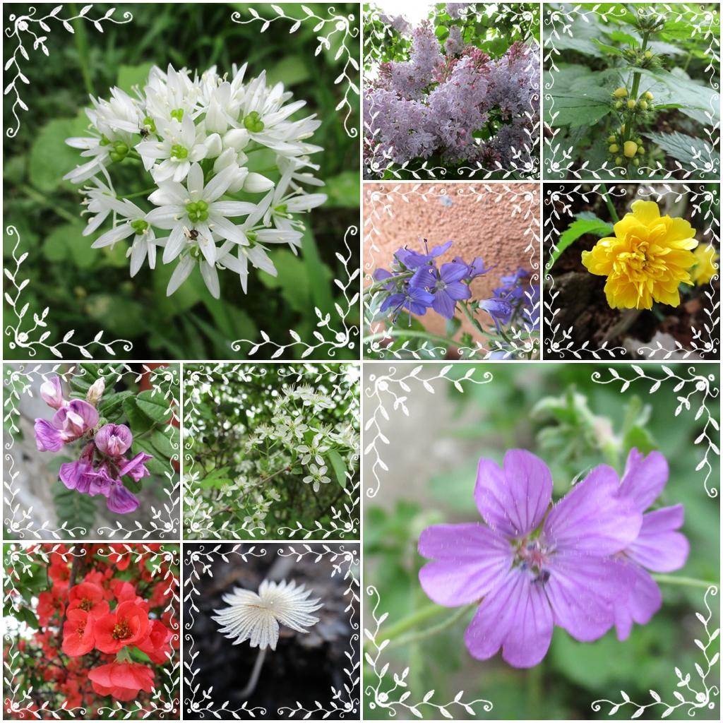 mein garten gestern foto bild pflanzen samen natur pflanzen bilder auf fotocommunity. Black Bedroom Furniture Sets. Home Design Ideas
