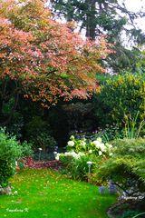 mein Garten im Okober