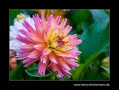 Mein Garten im September-3