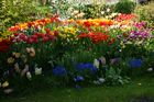Mein Garten in voller Pracht !!