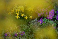 mein Garten zeigt FARBE