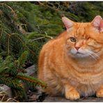 mein geliebtes Katerchen (mi querido gatito)