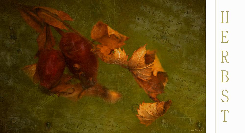 mein Herbst 10
