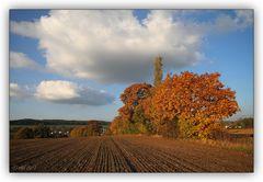 Mein Herbst - 9