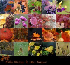 Mein Herbst in der Natur