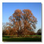 Mein Herbstbaum