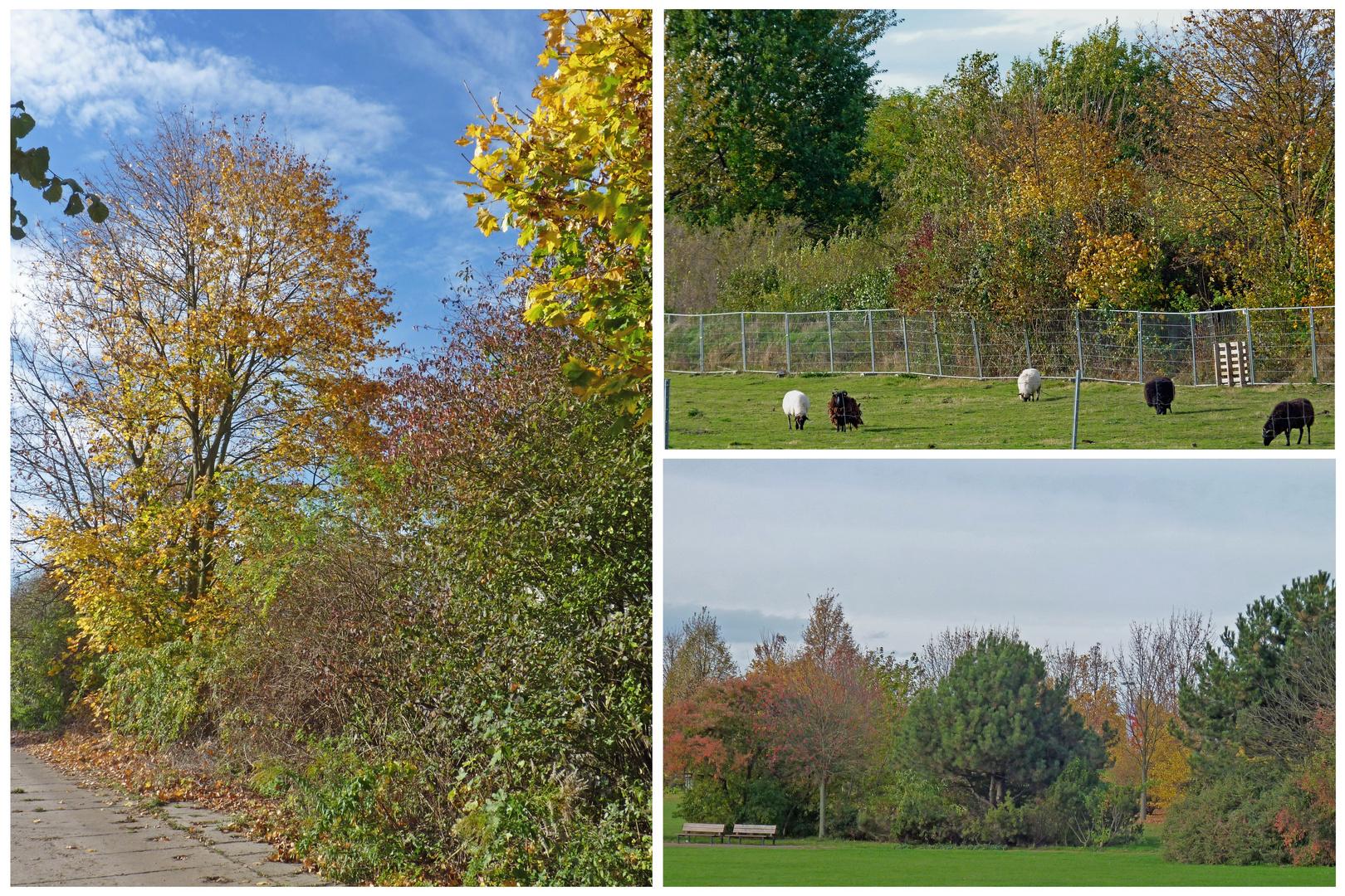 Mein Herbstspaziergang