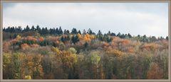 mein Herbstwald....