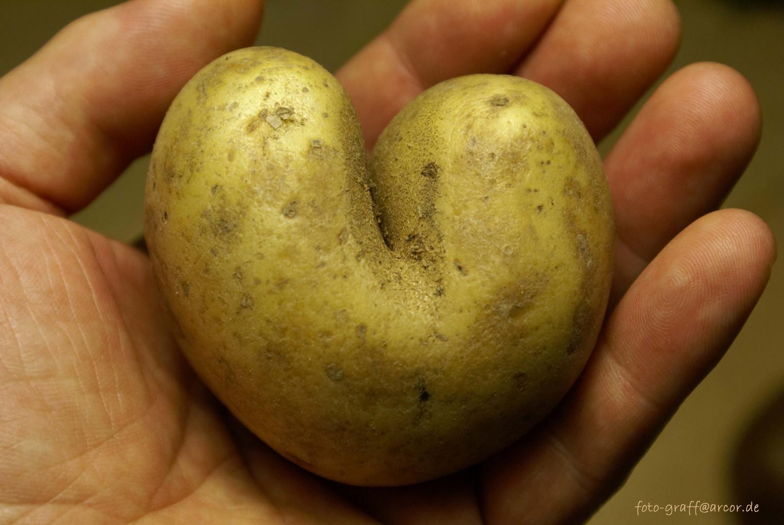 (M)ein Herz für Dich