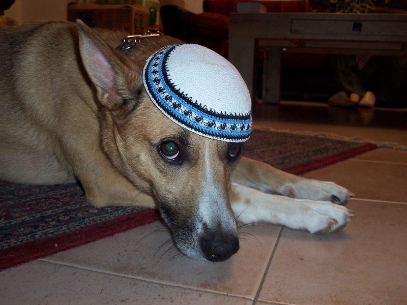 mein hund :)