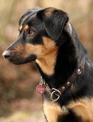 Mein Hund Aylin :)