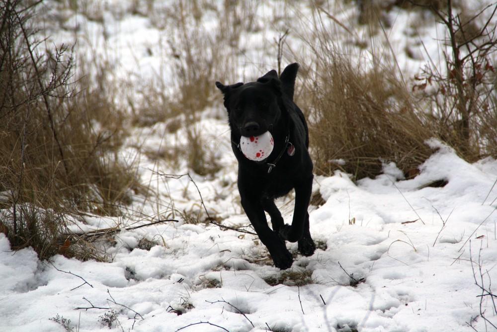 Mein Hund beim Ball holen