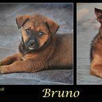 Mein Hund Bruno