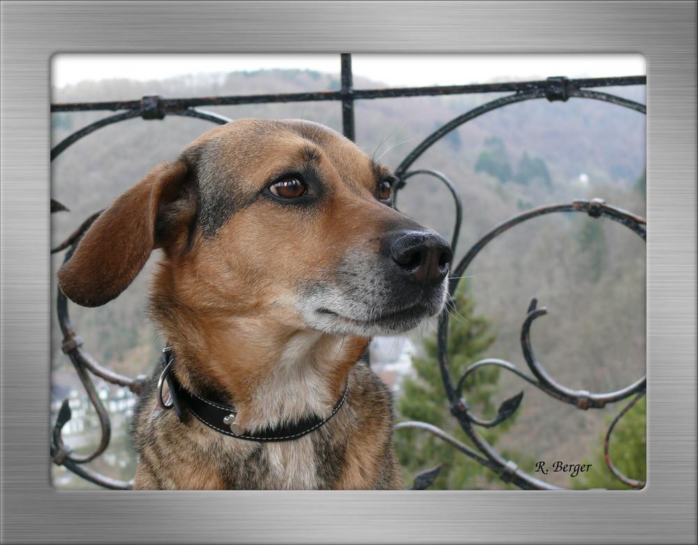 Mein Hund im Wald Bild3