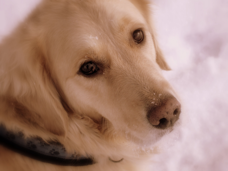 Mein Hund Ist Mir Im Sturme Treu Der Mensch Nicht Mal Im Winde