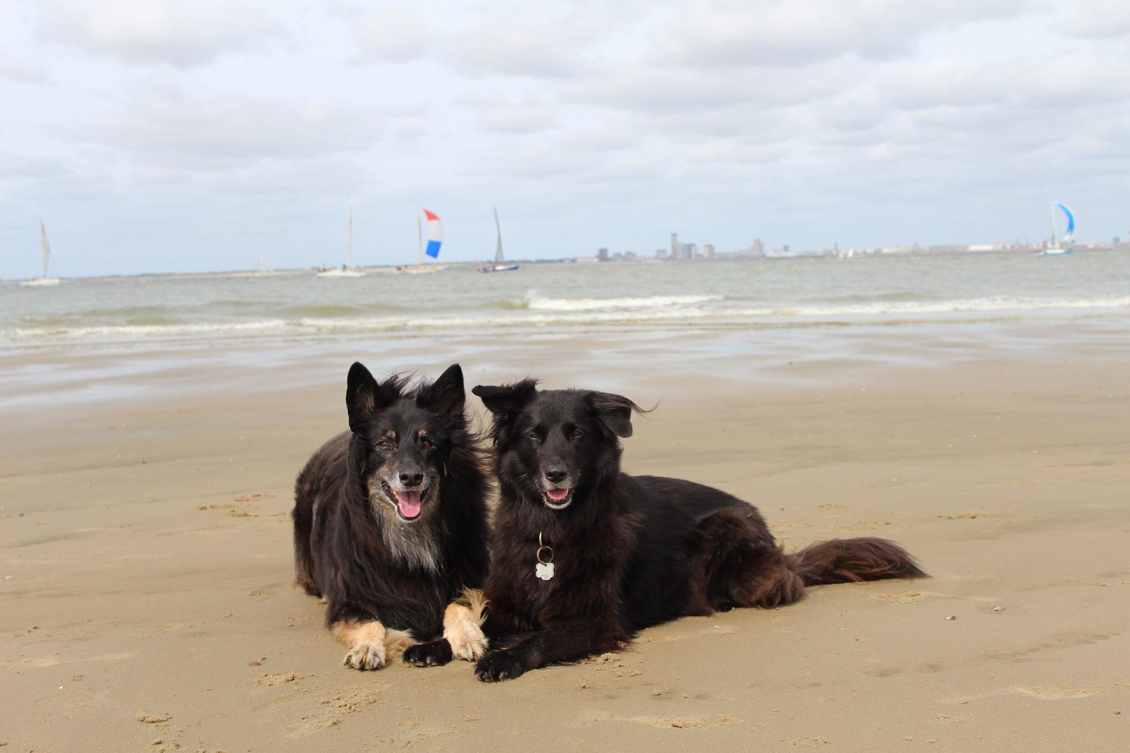 Mein Hund Ist Mir Im Sturme Treu Der Mensch Nichtmal Im Winde Foto