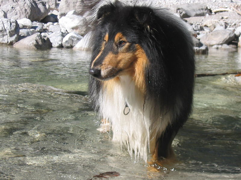 Mein Hund Mikosch