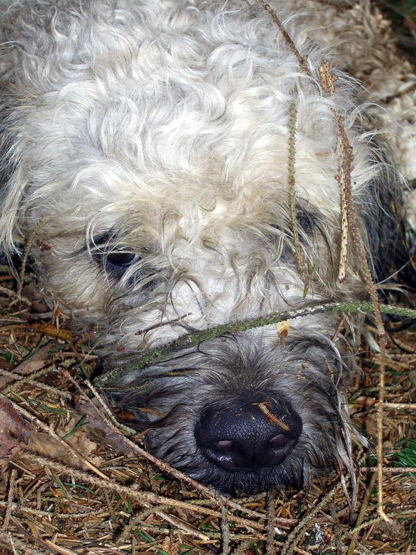 Mein Hund mitten im Wald