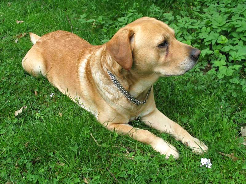 """Mein Hund """"Nico"""""""